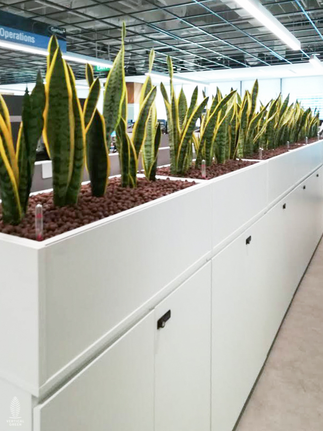 office cabinets planters singapore