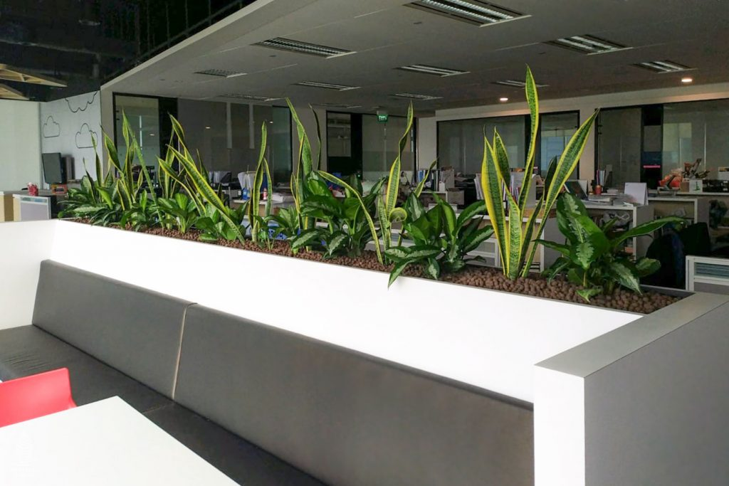 office planters singapore