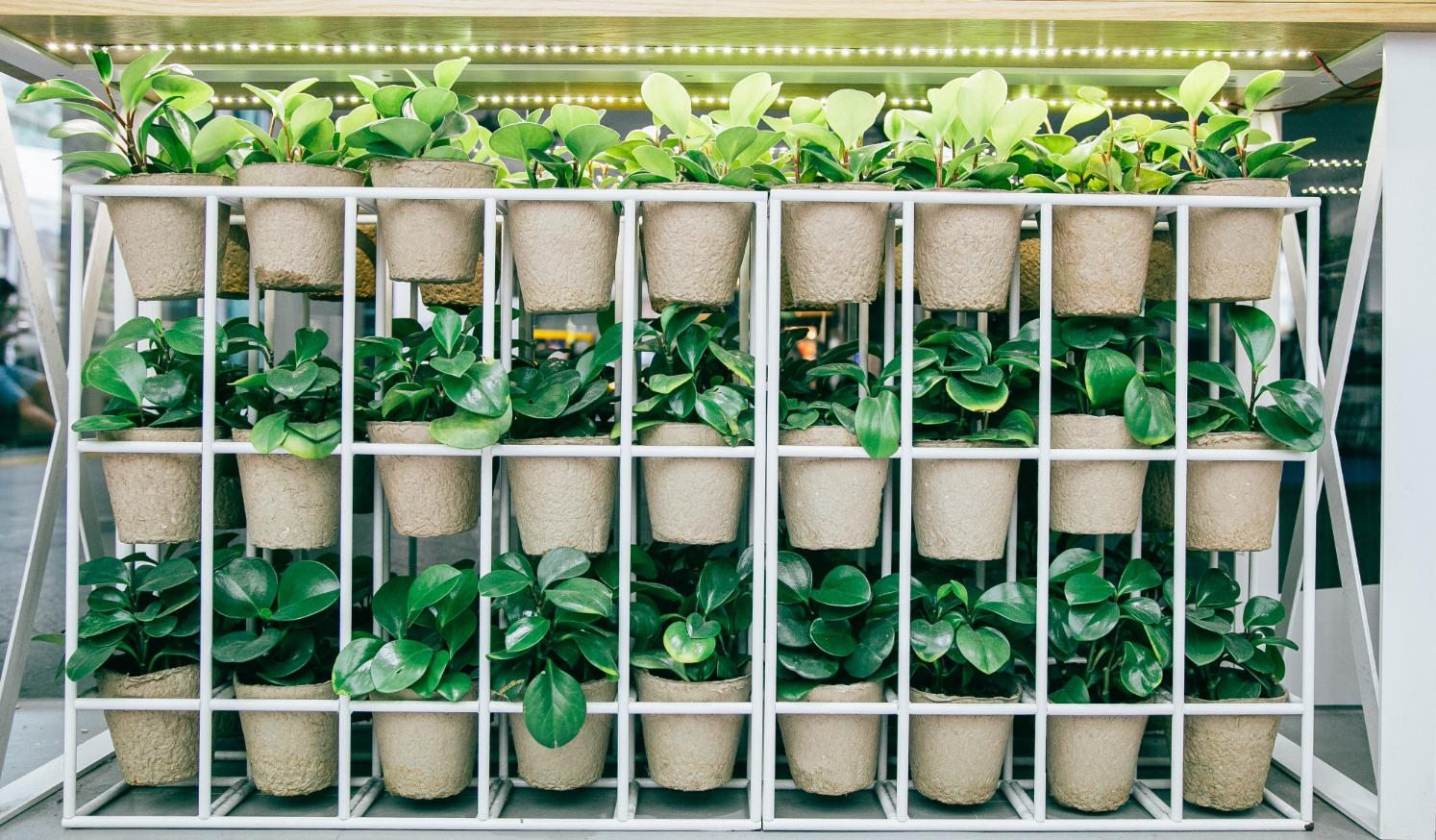 pots innisfree Rental plants singapore