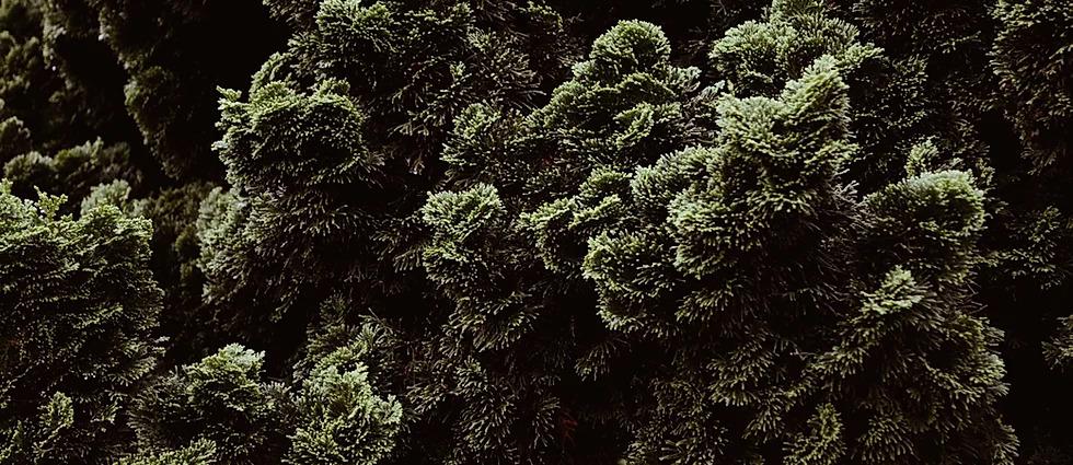 moss clean maintenance service singapore