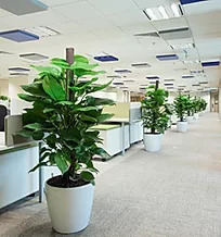 potted plants rental office retail singapore