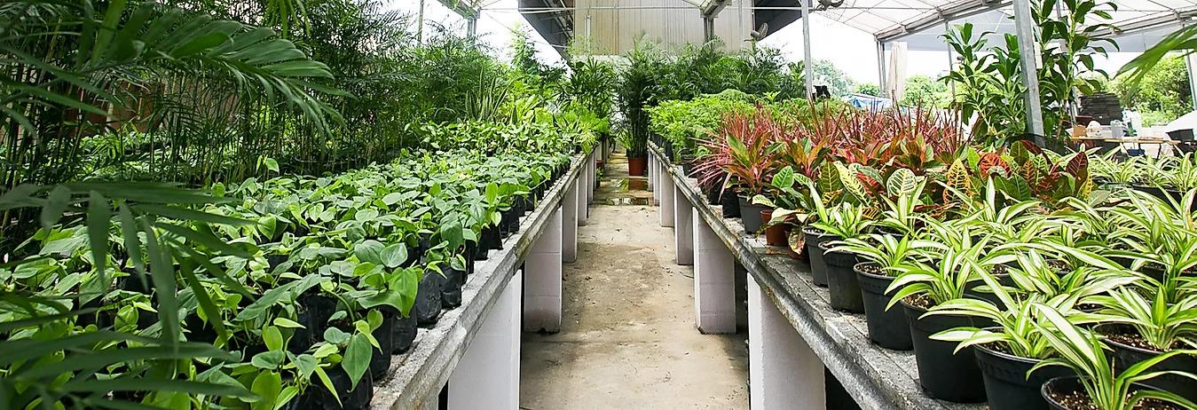 vertical green nursery