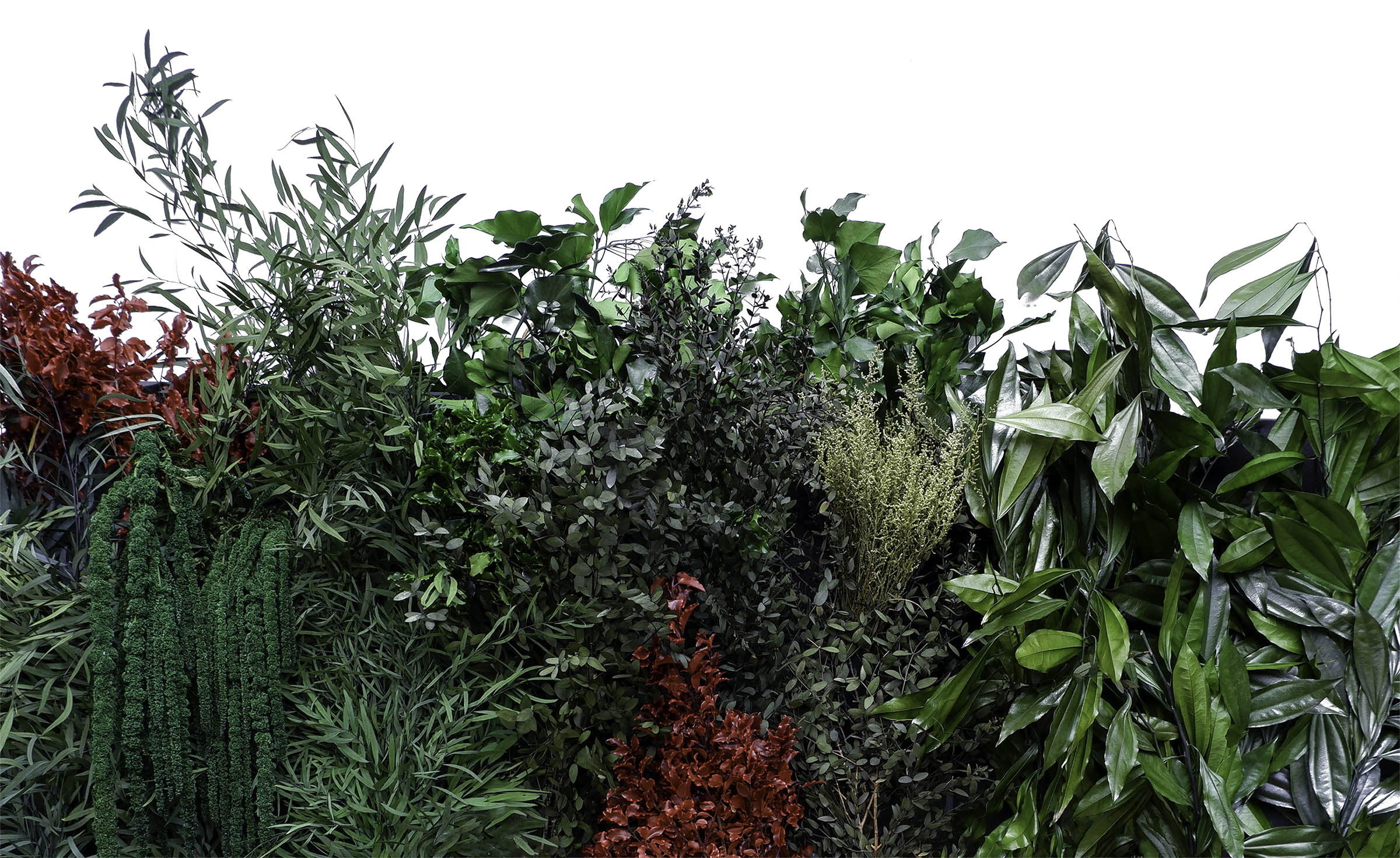 preserve plants green wall singapore