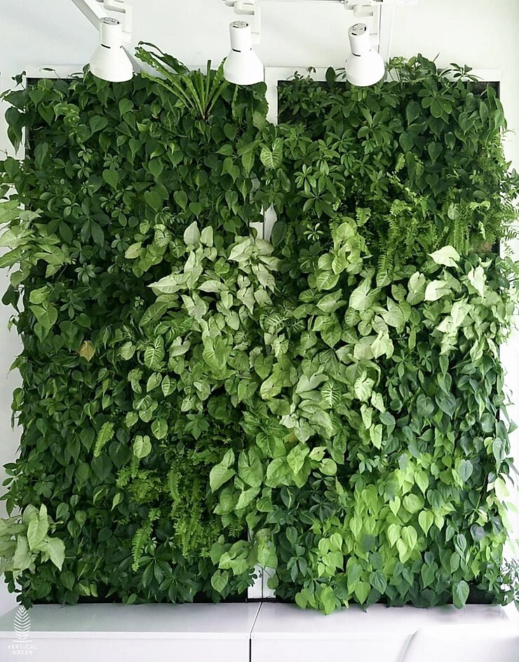 green wall Singapore homes