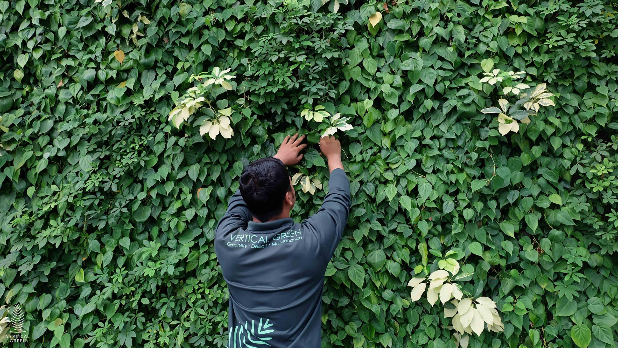 green wall maintenance singapore