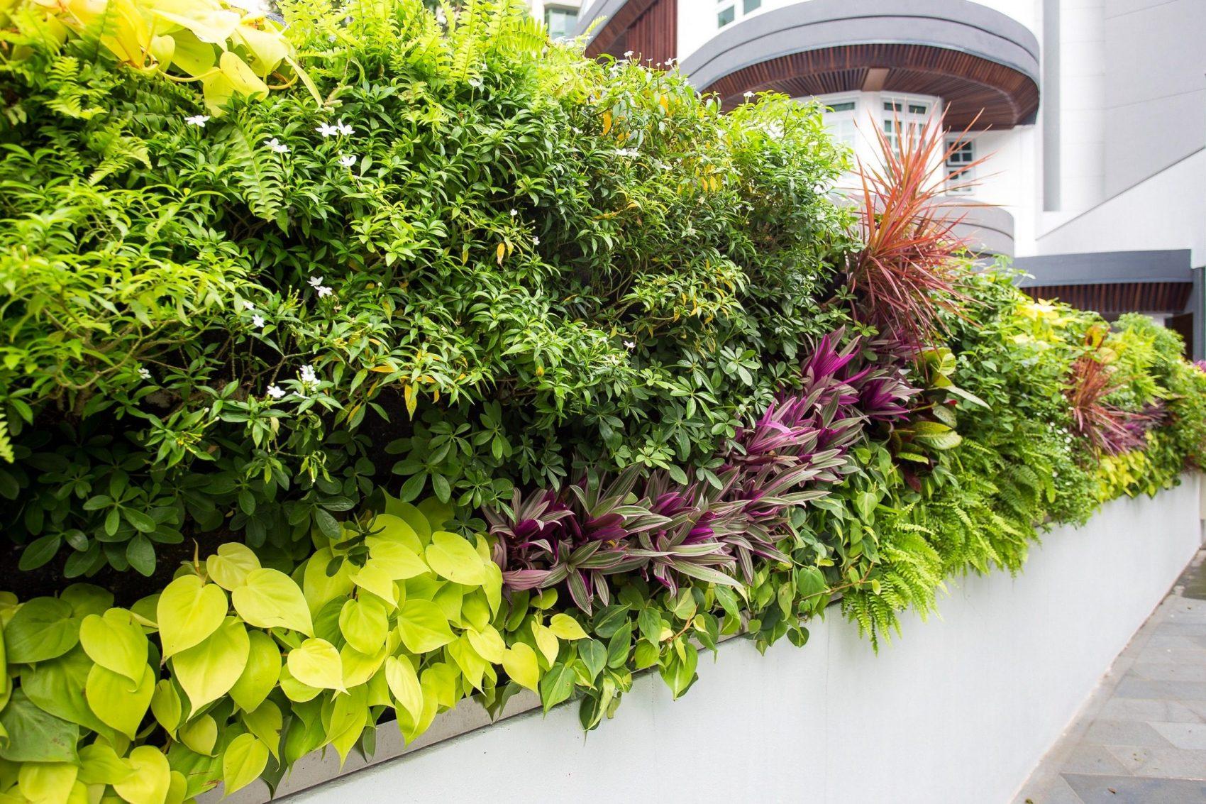 beautiful green wall
