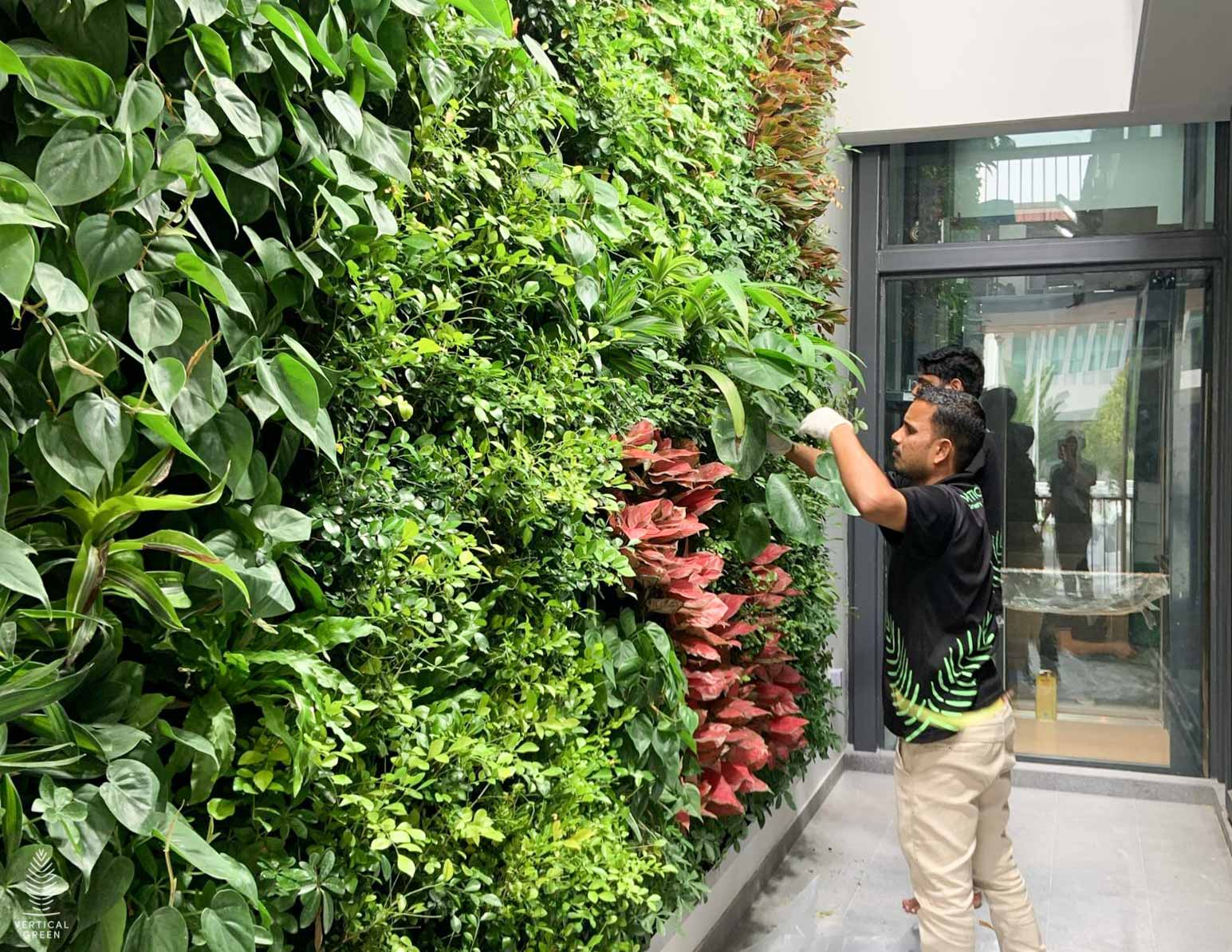 Saint Helier's Ave, Green wall installation maintenance Singapore