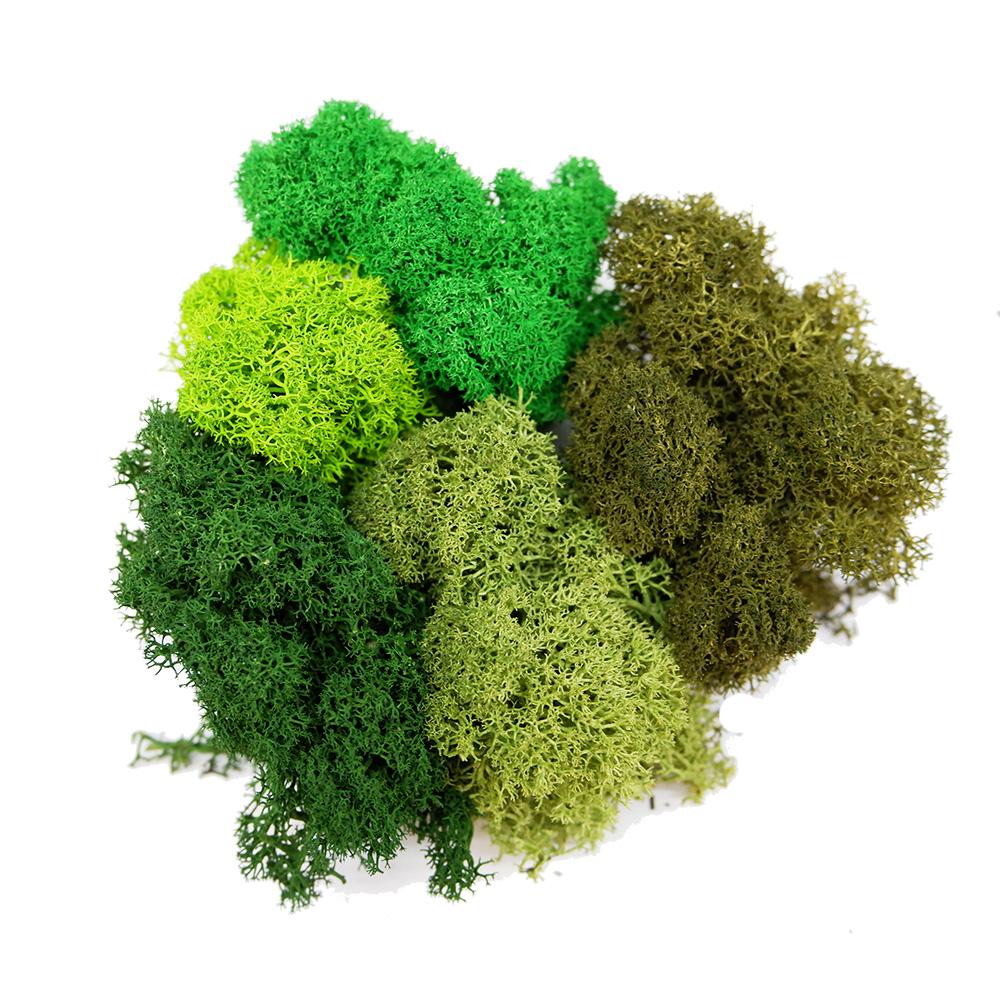 Reindeer Moss Colours