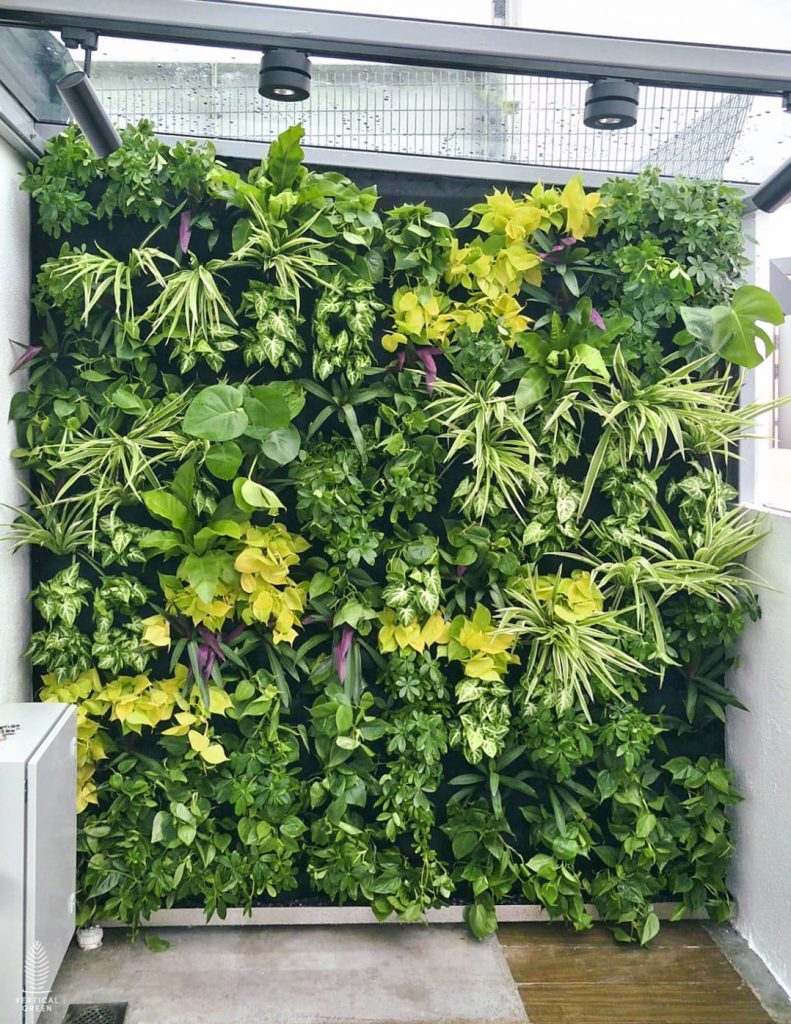 Semi outdoor Green Wall Home Rooftop Singapore