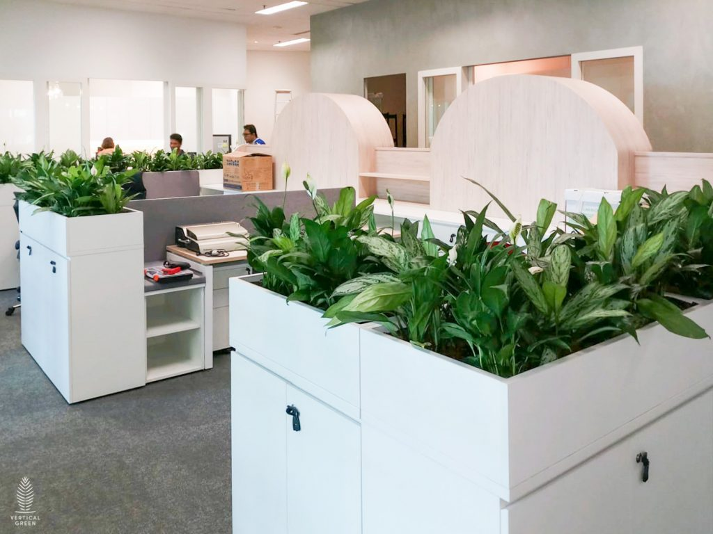 Wikborg Rein Rental Potted Plants Office Singapore Vertical Green