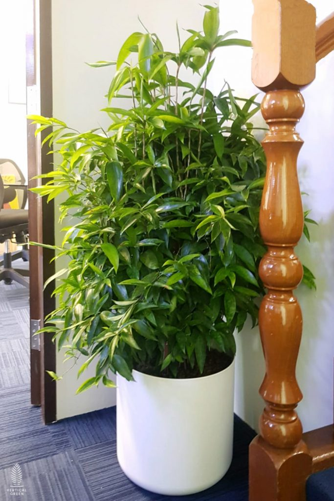 potted plants office rental commercial singapore