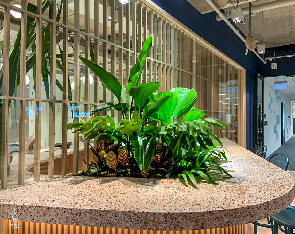 Hygro pots and live plants at Transferwise Singapore office